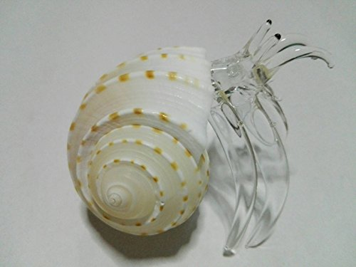 Cracker Jack Box Costume (Nice glass blowing hermit crab natural seashell : ( hermit crab Big ) rare items)