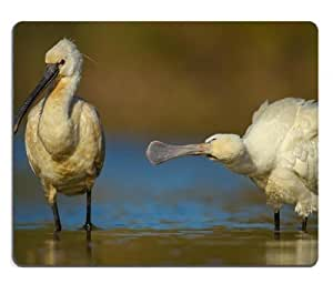 Nature Spoonbills Bird Water Pond Mouse Pads Customized Made to Order Support Ready 9 7/8 Inch (250mm) X 7 7/8 Inch (200mm) X 1/16 Inch (2mm) High Quality Eco Friendly Cloth with Neoprene Rubber MSD Mouse Pad Desktop Mousepad Laptop Mousepads Comfortable Computer Mouse Mat Cute Gaming Mouse pad