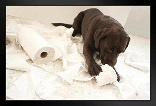 Dog Lying on Bathroom Floor Playing Toilet Paper Photo Art Print by Framed Poster 20x14 inch