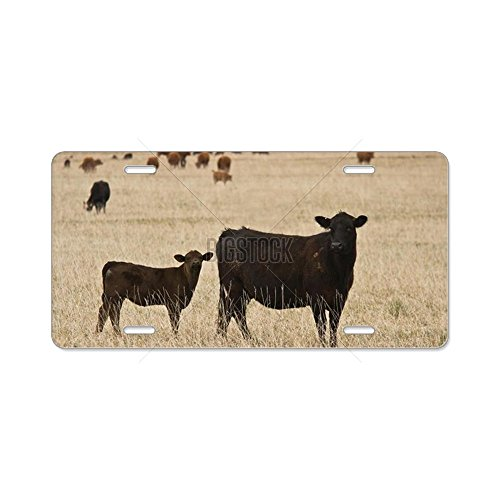 CafePress - Black Angus Cow With Calf Aluminum License Plate - Aluminum (Black Custom Calf Accessories)