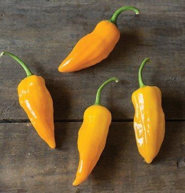 David's Garden Seeds Pepper Hot Ghost Golden KJ3269 (Yellow) 25 Hybrid Seeds
