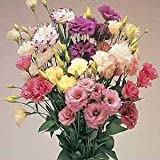 Outsidepride Lisianthus Magic Flower Seed Mix - 100 Seeds