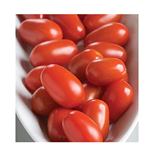 - David's Garden Seeds Tomato Grape Five Star SL7446 (Red) 25 Non-GMO, Hybrid Seeds