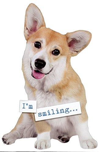 Amazon Corgi Die Cut Paper House Funny Dog Birthday Card