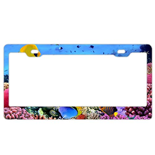 (Newshowlee License Plate Frame for US Cars, Metal Auto Car Tag for Women/Men, 12 x 6 Inches. Coral Underwater Reef Ocean Fishes Tropical Animals)