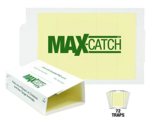 Banana Spider - Catchmaster AA1170 72MAX Pest Trap, 72 Pack White