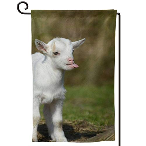 sport outdoor 003 Funny Baby Goat Smile 12.518