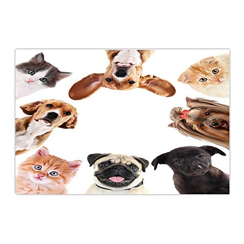 Funny Bath Rugs Cute Dog and Cat Overlook Non-Slip Doormat Floor Entryways Indoor Front Door Mat Bathroom Rug 15.7X23.6In ()
