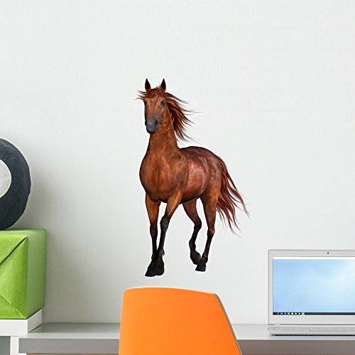 Wallmonkeys Beautiful Horse Wall Decal Peel and Stick Animal Graphics (18 in H x 14 in W) WM224683