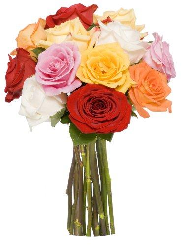 benchmark-bouquets-dozen-rainbow-roses-no-vase