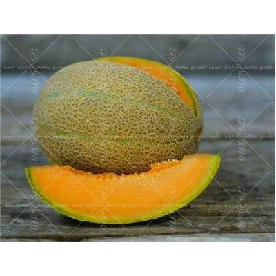 WANCHEN Fresh 50PCS Super Sweet Melon Hami Melon Organic Fruit Melon Heirloom Succulent Plants Easy Planting (Seeds not Plants) : Garden & Outdoor