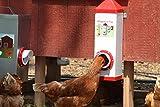 RentACoop PVC Twin Cup Chicken Waterer and Feeder