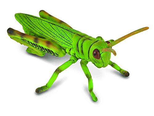 Collecta Insects Grasshopper Toy Figure - Authentic Hand ...