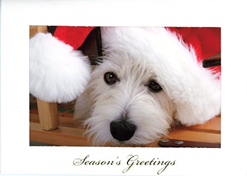 - Season's Greetings Photo Insert Card by Plymouth Cards- Pkg 10 (Horizontal, White)