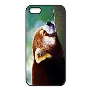 Customized case Of Raccoon Hard Case for iPhone 5,5S