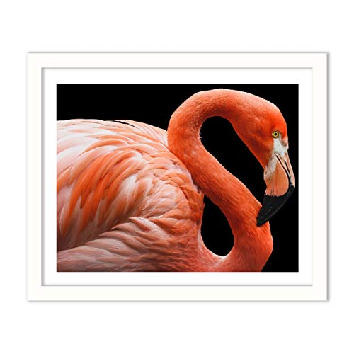 16x20 Photo Bird - Humble Chic Framed Wall Decor - Fine Art Picture Poster Prints in White Frame for Home Decorations Living Dining Room Bedroom Kitchen Bathroom Office - Flamingo Tropical Bird, 16x20 Horizontal