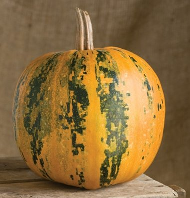 David's Garden Seeds Pumpkin Kakai (Seeds) D2860A (Multi Color) 25 Open Pollinated Seeds