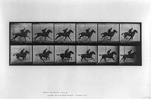 Eadweard Galloping Horse Muybridge (Photo: Animal Locomotion,Eadweard Muybridge,c1887,Daisy,Horse Galloping,Motion Study)
