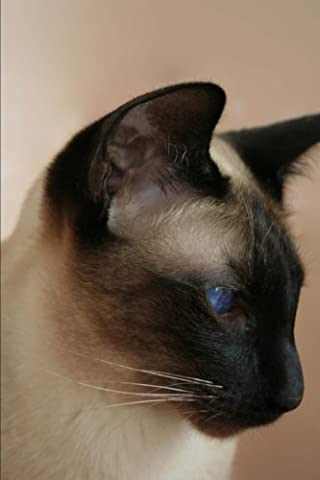 Seal Point Siamese Cat Portrait Journal: 150 page lined notebook/diary - Seal Point Siamese Cats