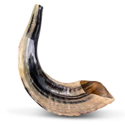 Classical Ram's Horn Shofar - Small - Natural Shofarot