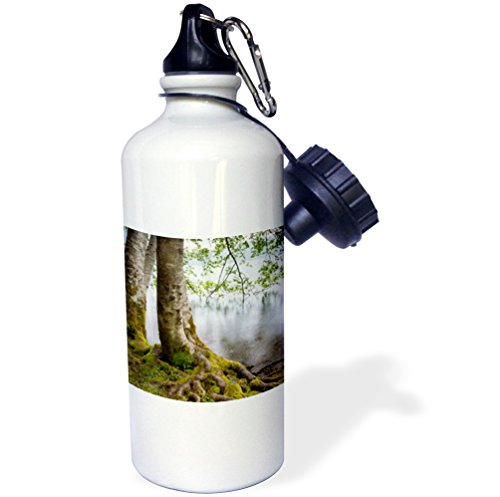 3dRose wb_190811_1 Usa, Washington, Olympic Np Alder Trees Overhanging Lake Crescent Sports Water Bottle, Multicolor, 21 oz by 3dRose