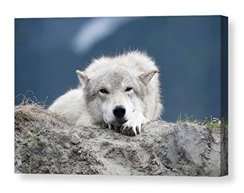 Wildlife Wall Art on CANVAS White Wolf Photography Animal Photo Print Wild Dog Portrait Alaskan Gift Blue Gray Ready to Hang 8x10 8x12 11x14 12x18 16x20 16x24 20x30 24x36