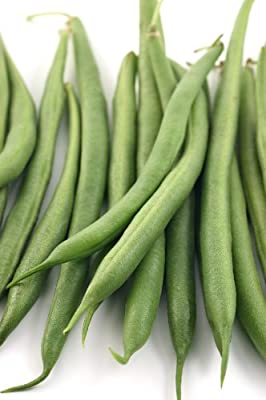 Strike Bush - Bean Seeds