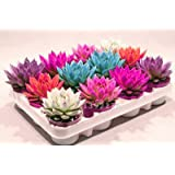 Rare Beauty Succulents Seeds Easy To Grow Potted Flower 200pcs bonsai Seeds for Home & Garden