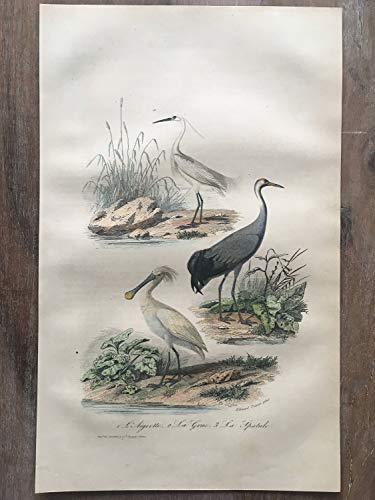 - 1870 Bird Original Antique Engraving, Hand Colored Engraving, Birds Engraving, Bird Art, Antique Bird Print, White Heron, Crane Print, bog