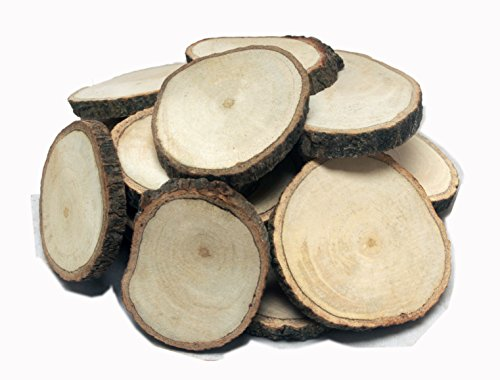 12-big-unfinished-craft-wood-slices-2-1-2-to-3-tree-cookies-by-nesha