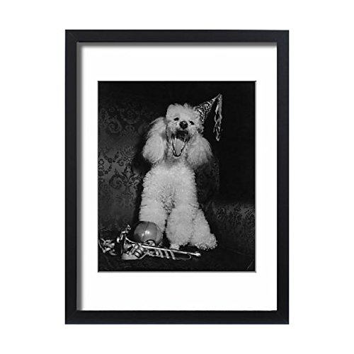 Framed 24×18 Print of White poodle in a party hat (14414305) 417J f5AMKL
