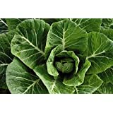Premier Seeds Direct COL02 Collards Vates Green Finest Seeds (Pack of 500)