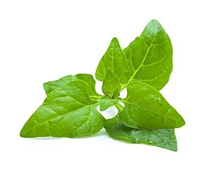 New Zealand Spinach- Spinach New Zealand Spinach Seeds 50+ Seeds