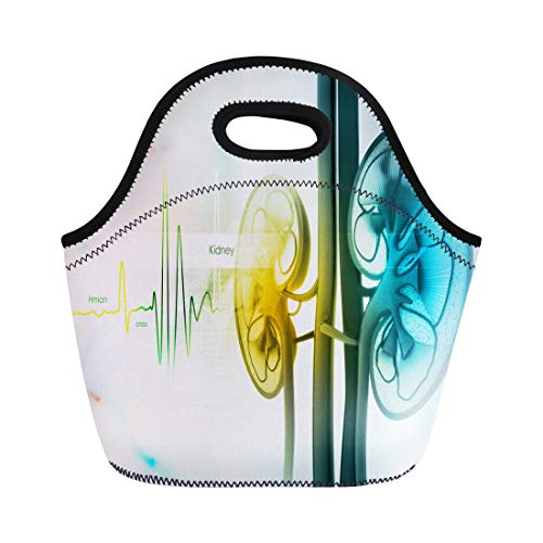 Semtomn Lunch Bags Dialysis Transplant Human Kidney Cross Section Organ Physiology Renal Neoprene Lunch Bag Lunchbox Tote Bag Portable Picnic Bag Cooler Bag