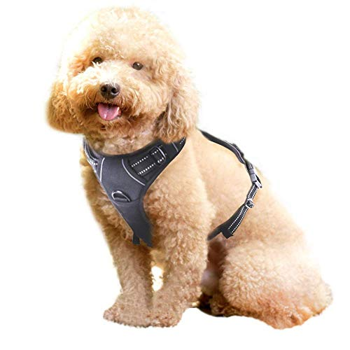 Rabbitgoo No Pull Dog Harness Small, Front Loading Pet Vest Harness with...