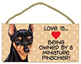 Love is being owned by a Miniature Pinscher 5