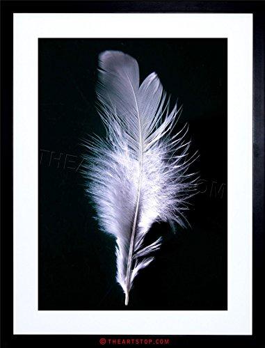 PHOTO MODERN BLACK WHITE FEATHER BIRD FRAMED PRINT F12X4074