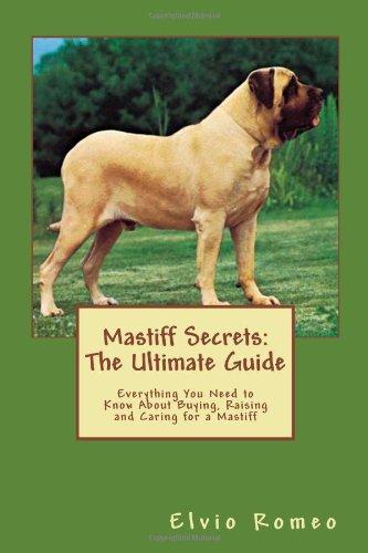 18 Adult Bullmastiffs for Sale