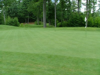 Penncross Bentgrass Putting Green Seed - 1 Lb.