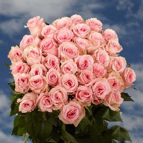 50 Fresh Cut Pink Roses | 16-18 Inches Long Stem | Fresh (Deliver Flowers)