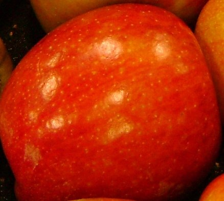 4 N 1 APPLE TREE - Includes these 4 varieties (Fuji, Gala, Granny Smith & Early Summer ()