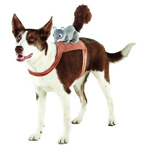 Squirrel Rider Pet Costume S/M - Squirrel Costume For Dog
