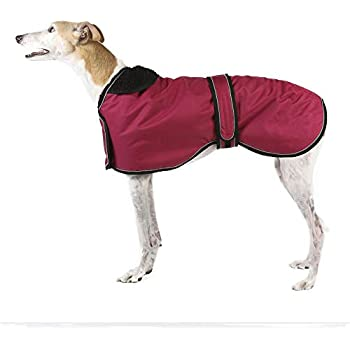 Amazon.com : Ancol Muddy Paws Greyhound Coat, X-large(70cm