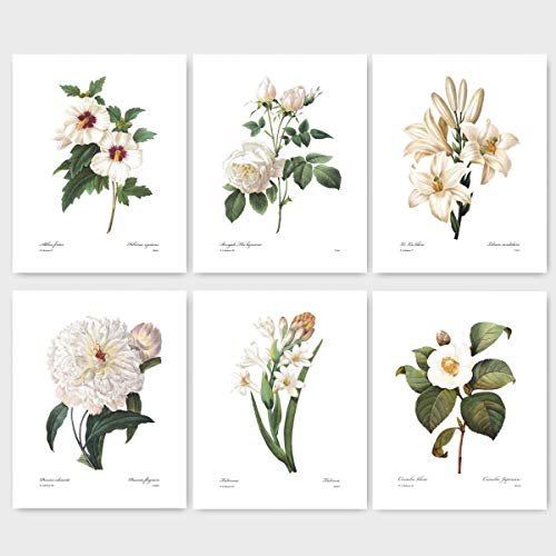(Set of 6) Botanical Prints (Redoute Flower Wall Art White Room Decor) Camelia Peony Rose Hibiscus Lily - 8x10 -