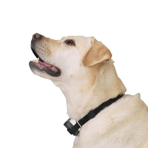 Intellipet Citronella Anti-Bark Dog Collar