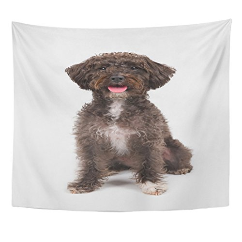 Emvency Tapestry Alert Black Schnoodle Schnauzer Poodle Breed Dog Sitting White Home Decor Wall Hanging for Living Room Bedroom Dorm 50x60 inches