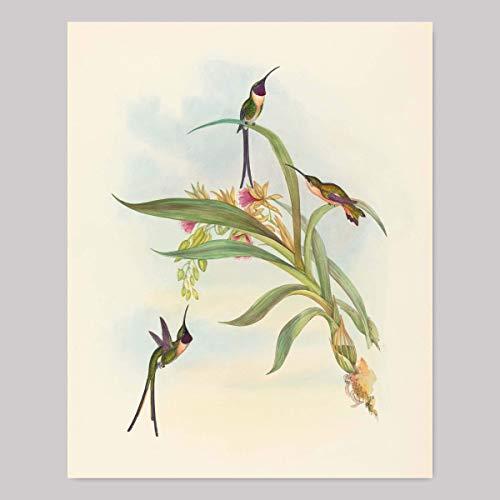 Bird Art for Walls, Hummingbird Print (Tropical Home Decor, John Gould Botanical Birds)
