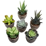EWONICE-Decorative-Assorted-Potted-Succulents-Plants-Mini-Artificial-Succulent-Plants-Potted-Faux-Cactus-Aloe-with-Gray-Pots-Artificial-Topiary-Plant-Potted-Home-Decoration-Gift-Set-of-6