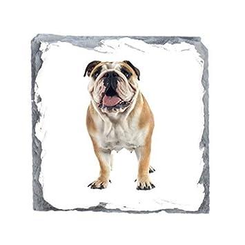 Englisch Bulldogge Bild Schiefer Getränke Untersetzer: Amazon.de ...