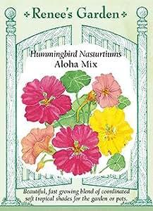 Hummingbird Nasturtiums 'Aloha Mix'